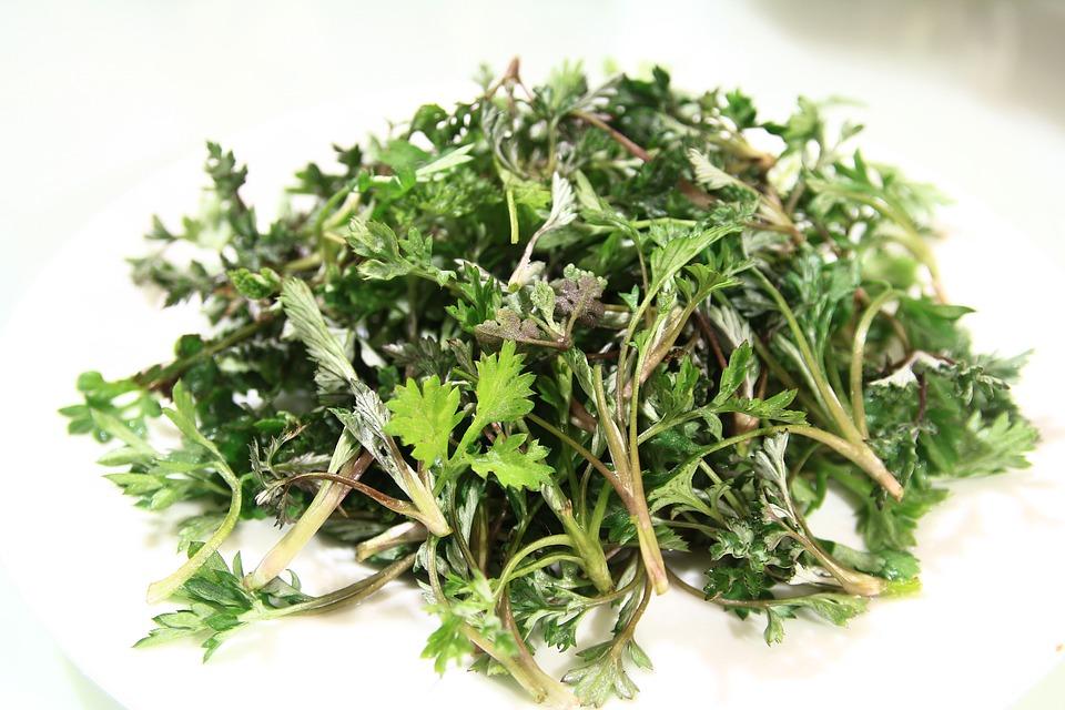 L'armoise artemisia annua bio une plante médicinale anti cancer et anti paludisme naturel puissant